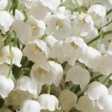 Convallaria majalis | květ