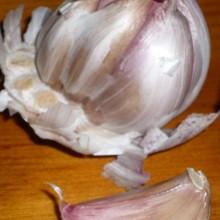 Allium sativum, Česnek setý, květ červenec